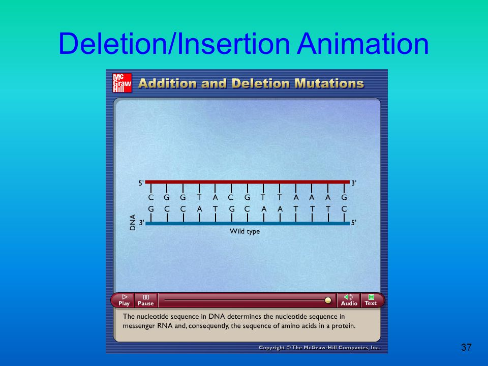 Deletion/Insertion Animation