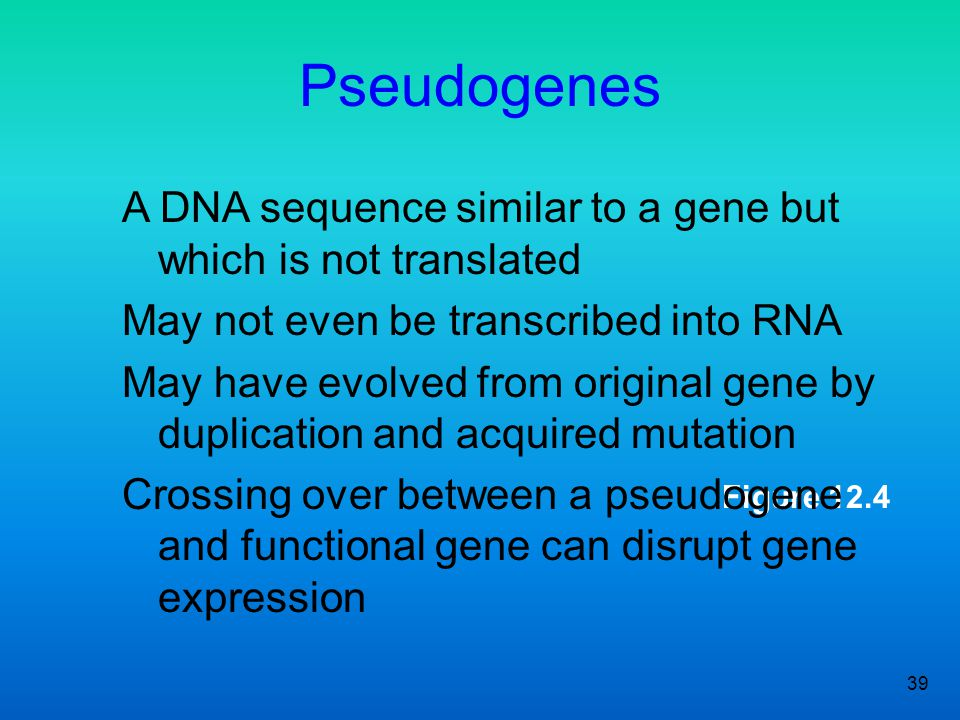 Pseudogenes A DNA sequence similar to a gene but which is not translated. May not even be transcribed into RNA.