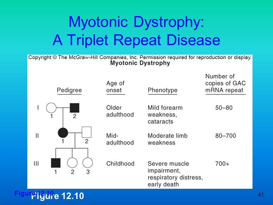 Myotonic Dystrophy: A Triplet Repeat Disease