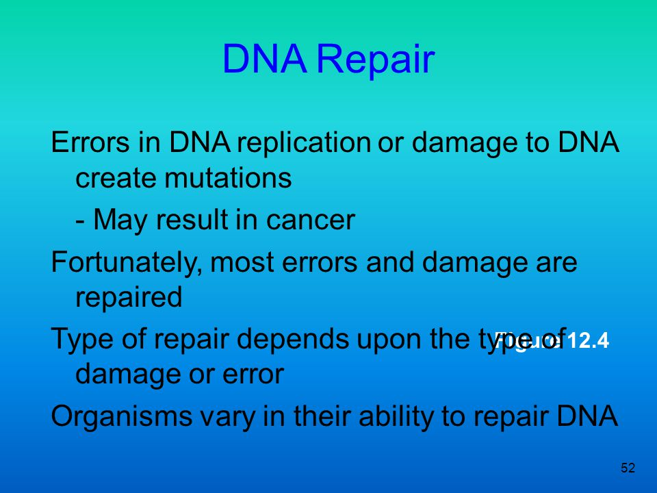 DNA Repair Errors in DNA replication or damage to DNA create mutations
