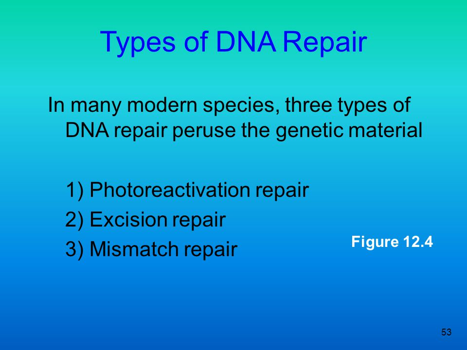Types of DNA Repair In many modern species, three types of DNA repair peruse the genetic material. 1) Photoreactivation repair.