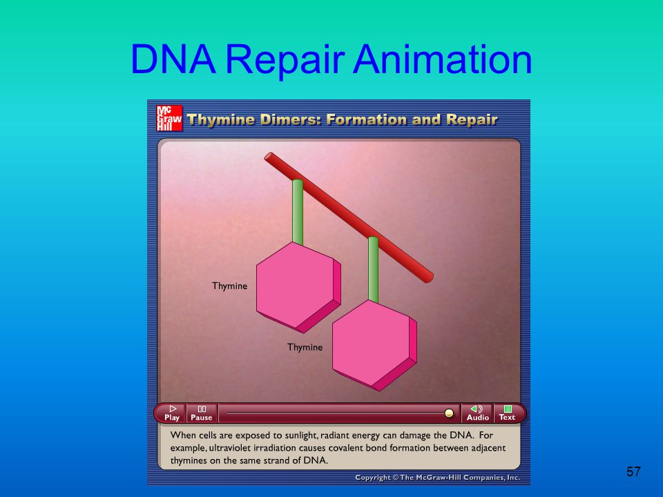 DNA Repair Animation
