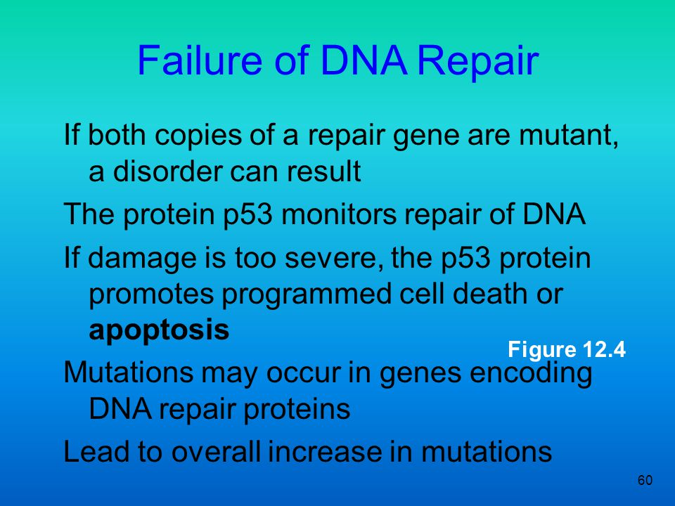 Failure of DNA Repair If both copies of a repair gene are mutant, a disorder can result. The protein p53 monitors repair of DNA.