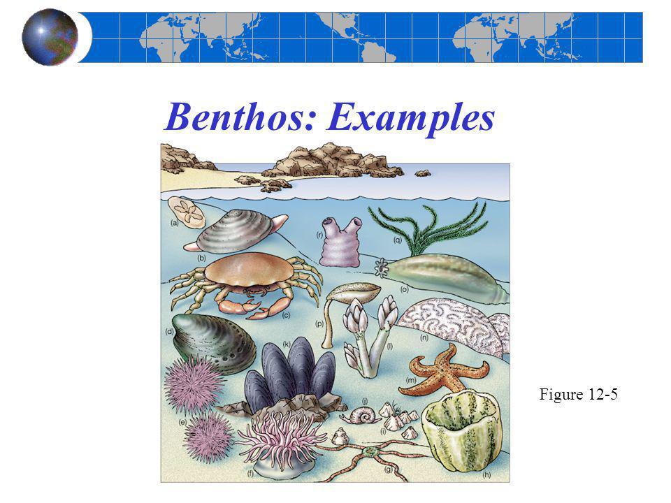 Benthos: Examples Figure 12-5