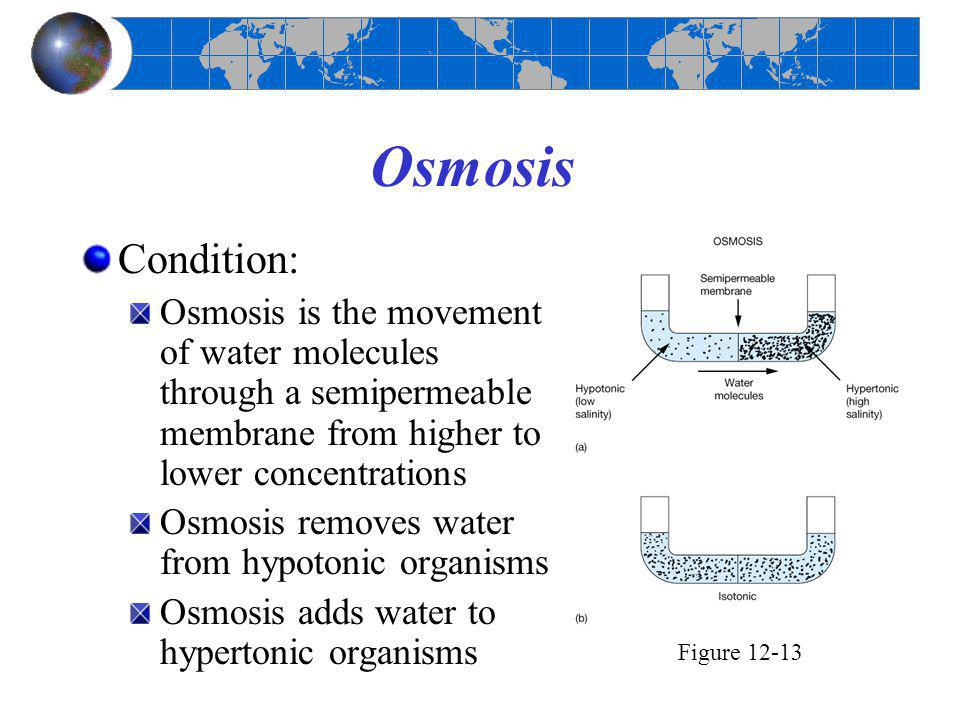 Osmosis Condition: Osmosis is the movement of water molecules through a semipermeable membrane from higher to lower concentrations.