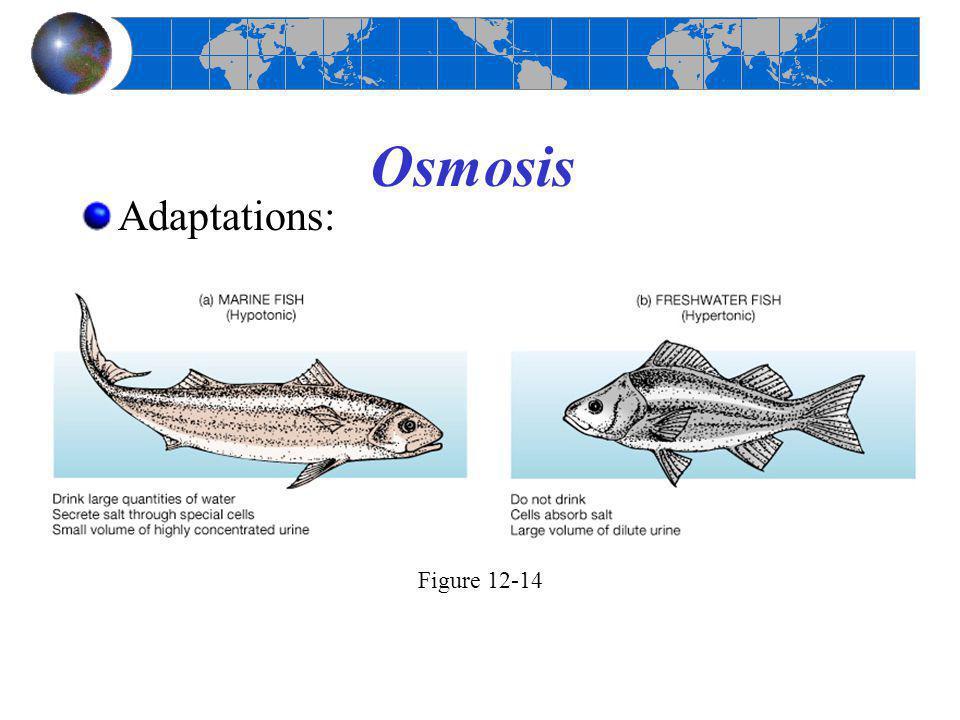Osmosis Adaptations: Figure 12-14