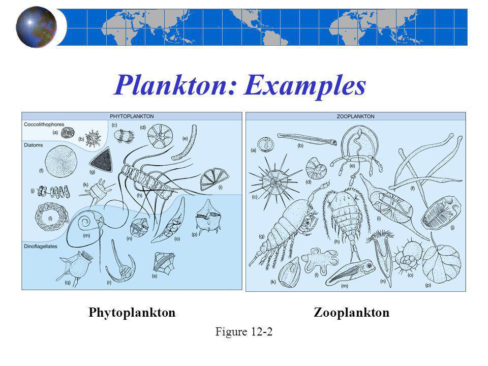 Plankton: Examples Phytoplankton Zooplankton Figure 12-2