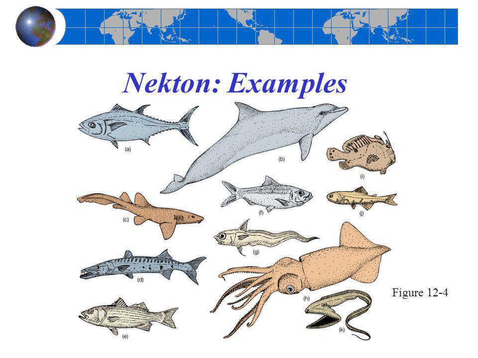 Nekton: Examples Figure 12-4