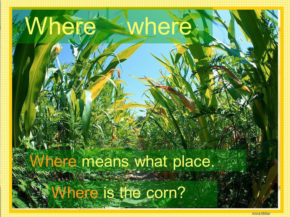 Where where Where means what place. Where is the corn