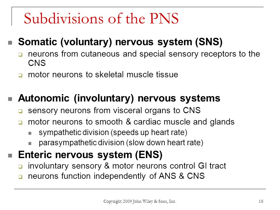 Subdivisions of the PNS
