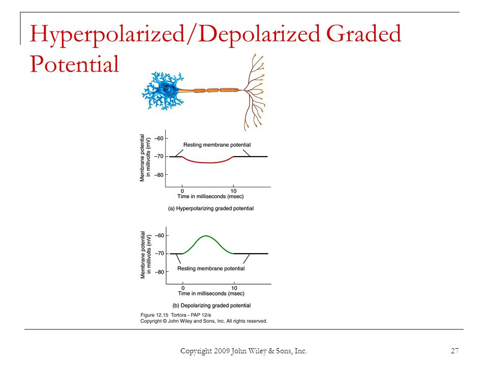 Hyperpolarized/Depolarized Graded Potential
