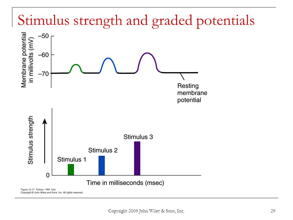 Stimulus strength and graded potentials