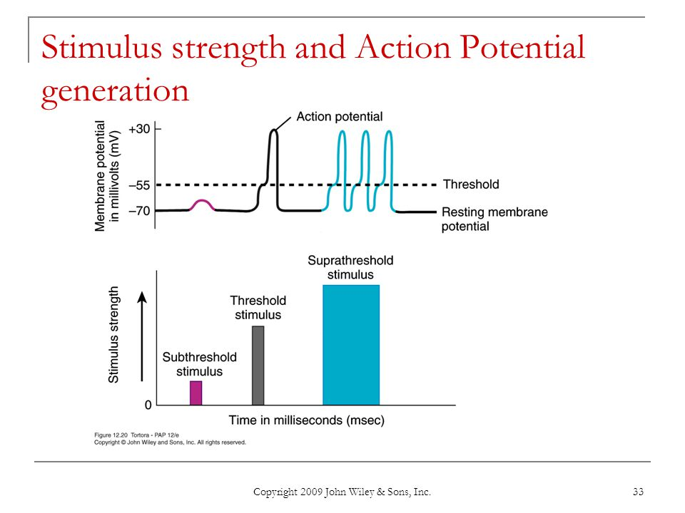 Stimulus strength and Action Potential generation
