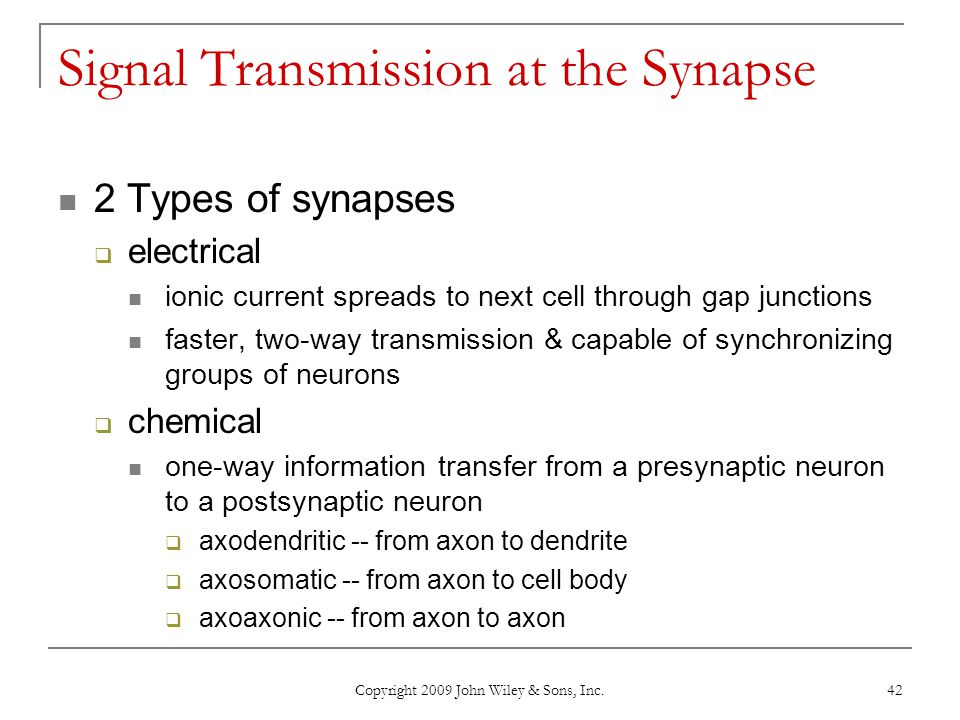 Signal Transmission at the Synapse