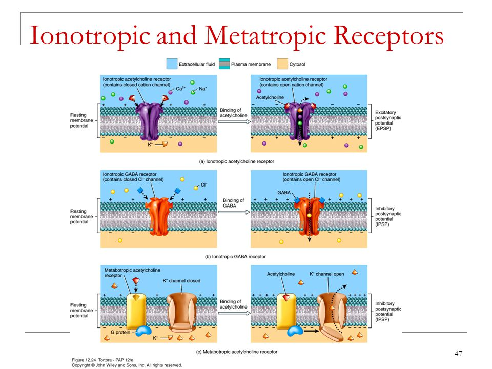 Ionotropic and Metatropic Receptors