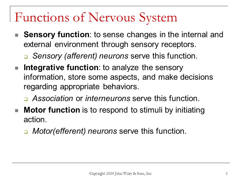 Functions of Nervous System