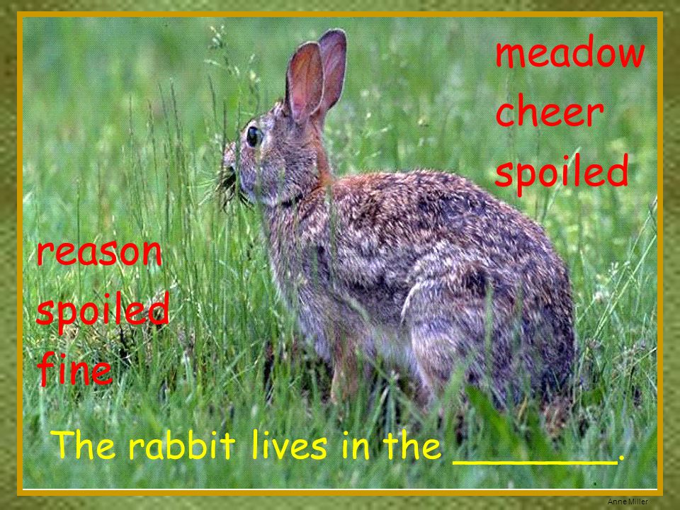The rabbit lives in the _______.