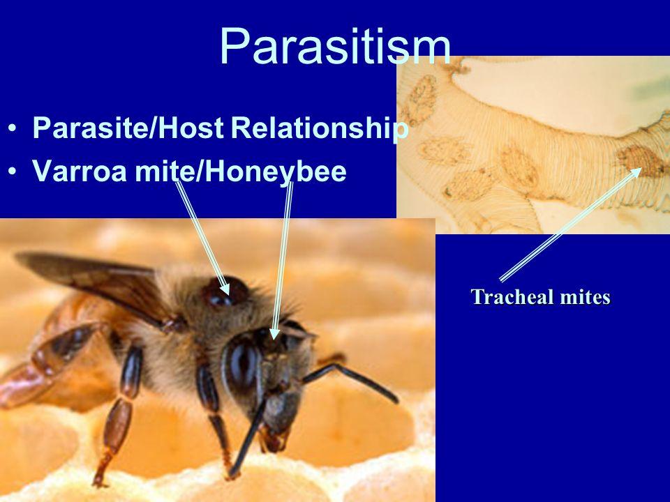 Parasitism Parasite/Host Relationship Varroa mite/Honeybee
