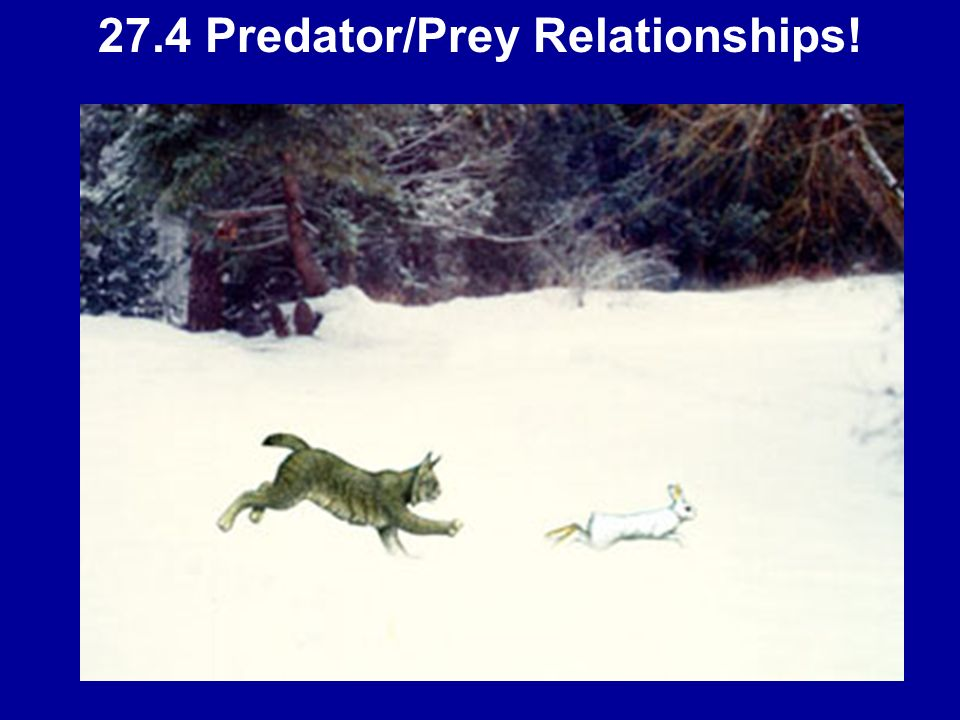 27.4 Predator/Prey Relationships!