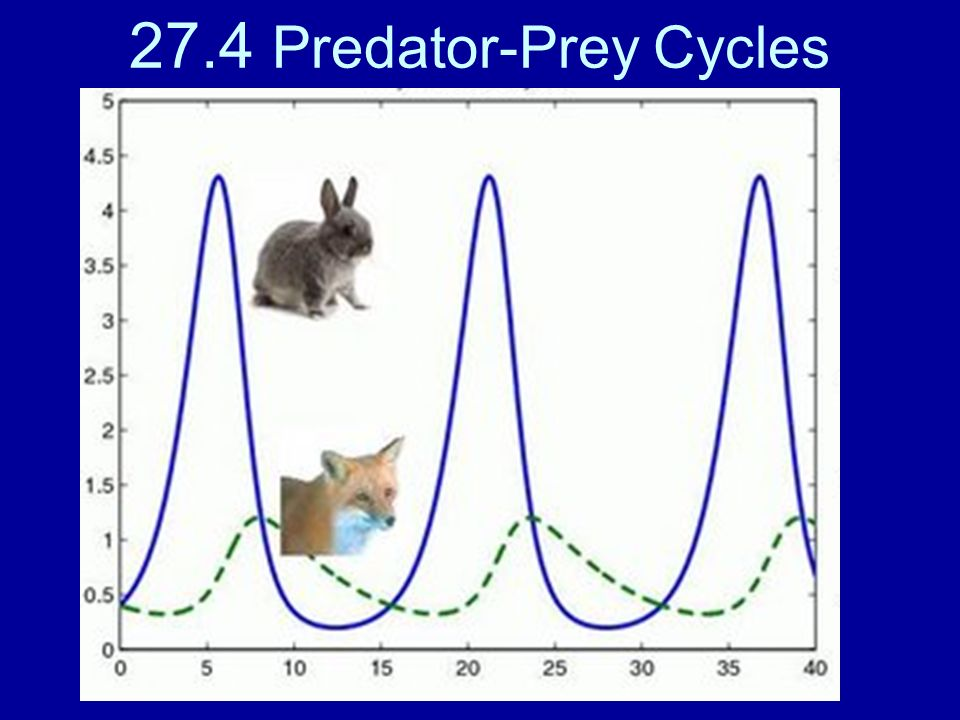 27.4 Predator-Prey Cycles