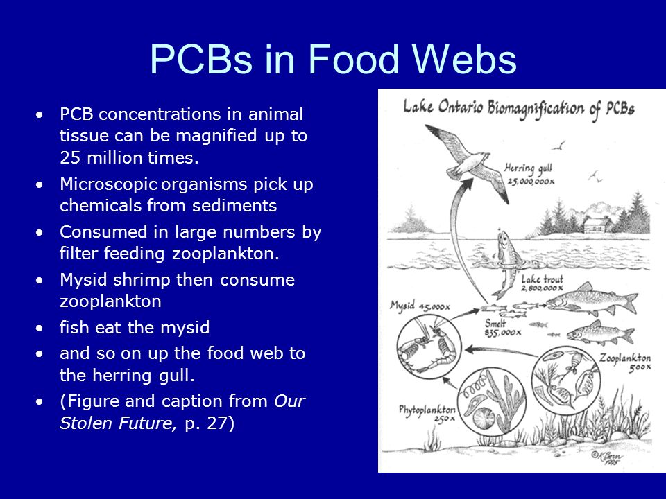 PCBs in Food WebsPCB concentrations in animal tissue can be magnified up to 25 million times.