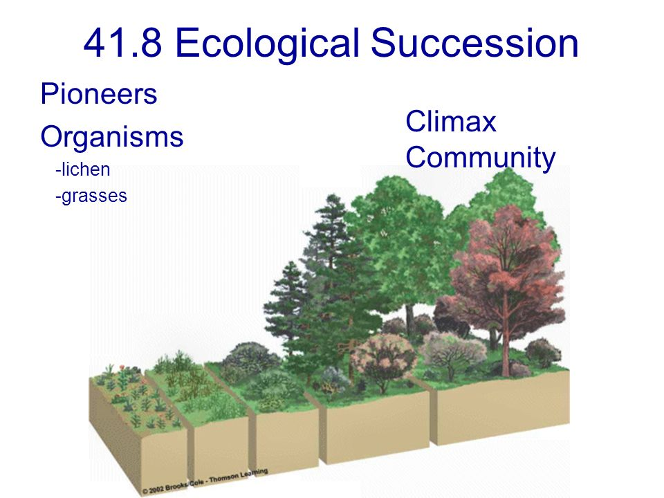41.8 Ecological Succession
