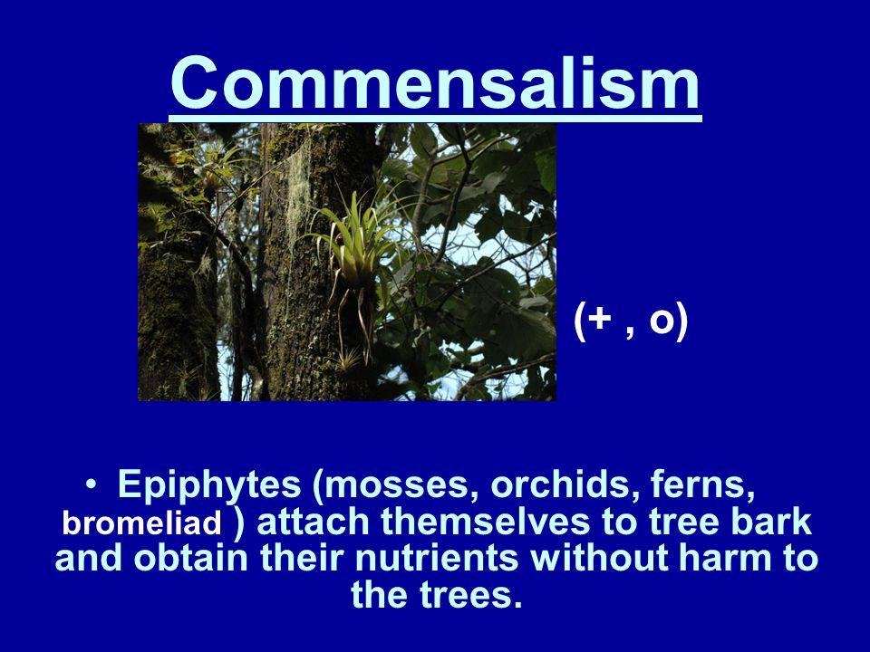 Commensalism (+ , o)