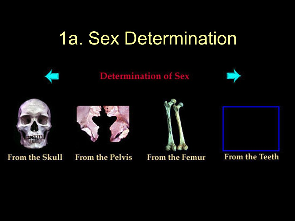 1a. Sex Determination