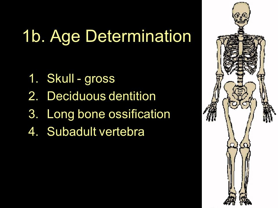 1b. Age Determination Skull - gross Deciduous dentition