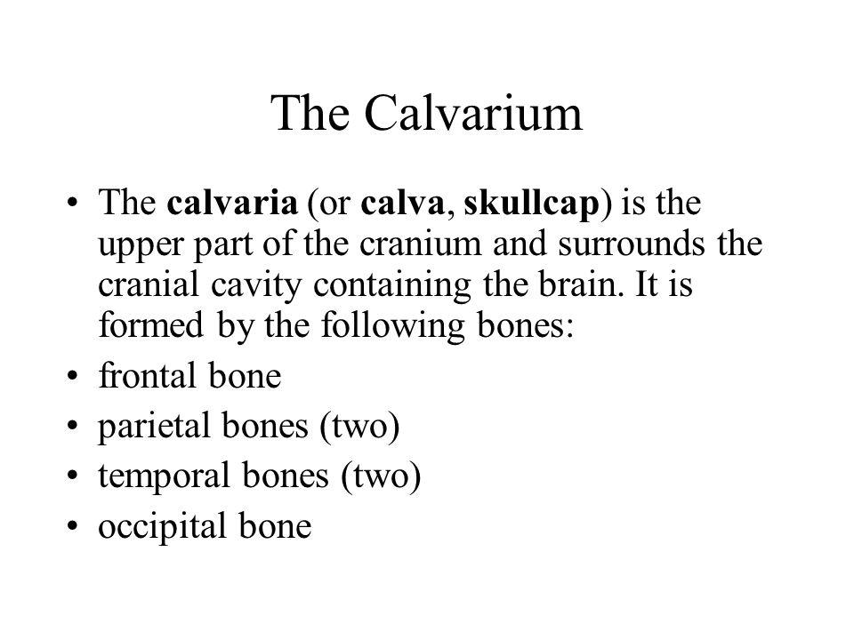 The Calvarium