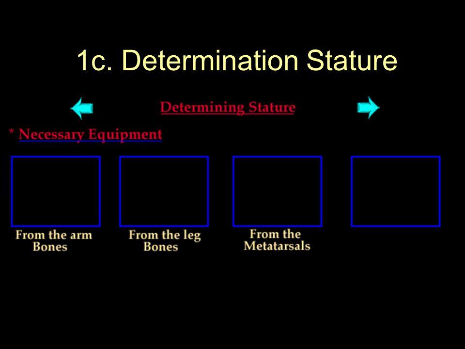 1c. Determination Stature
