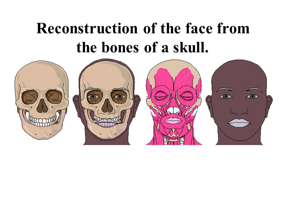 Reconstruction of the face from the bones of a skull.