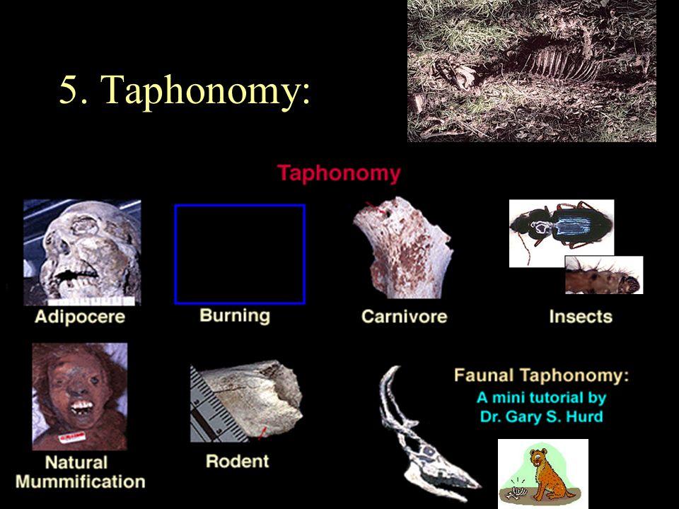 5. Taphonomy: