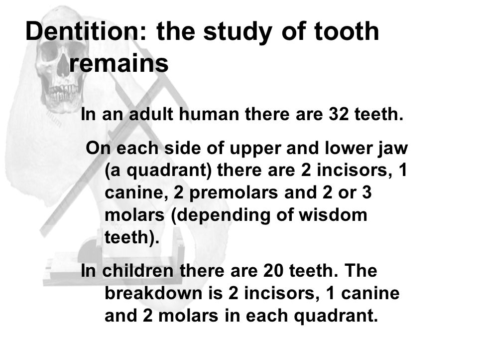 Dentition: the study of tooth remains