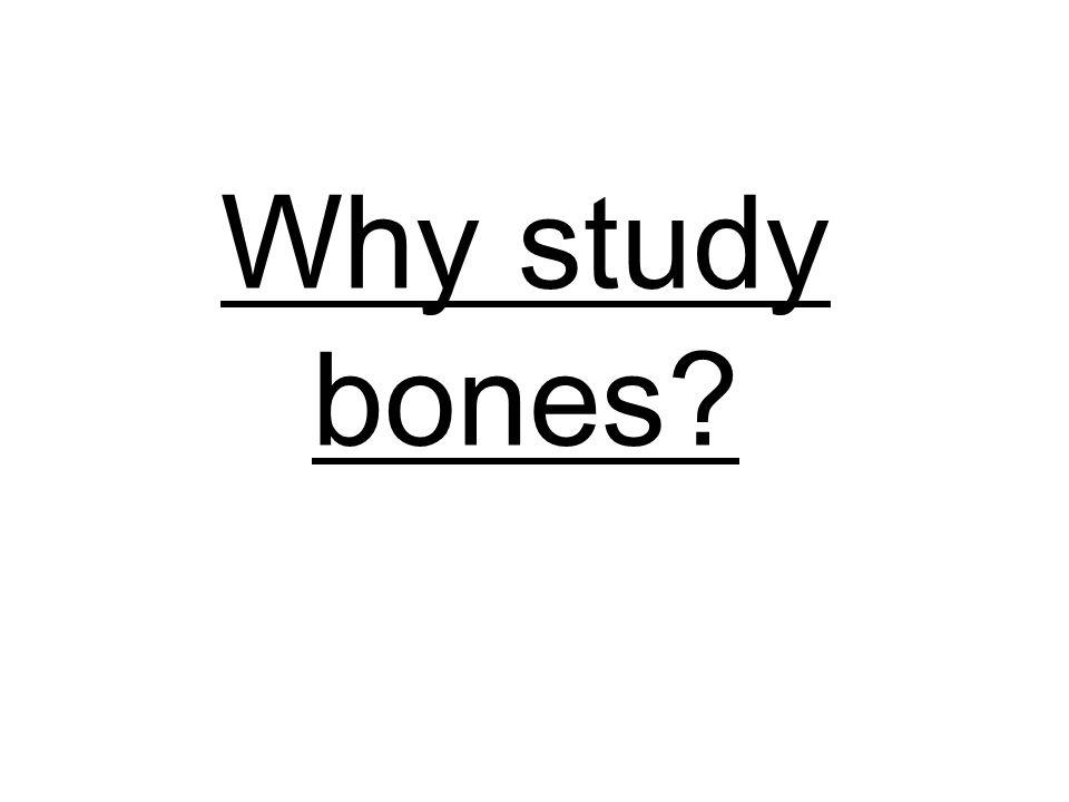 Why study bones