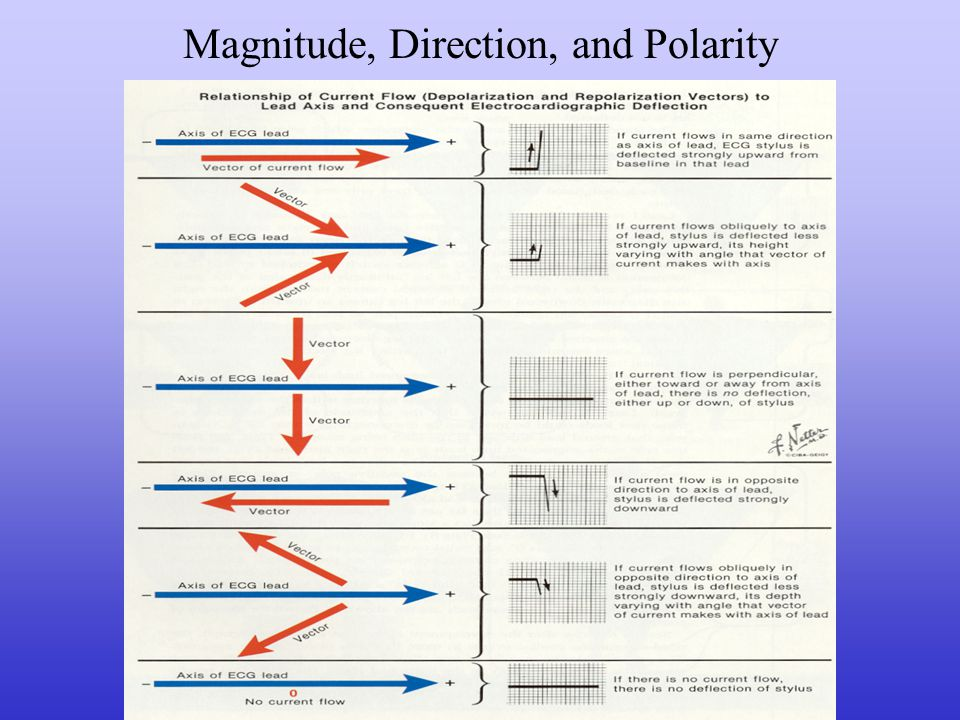 Magnitude, Direction, and Polarity