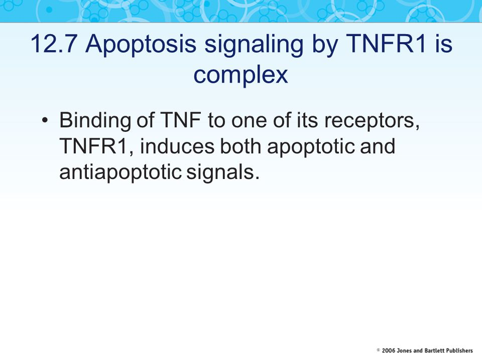 12.7 Apoptosis signaling by TNFR1 is complex