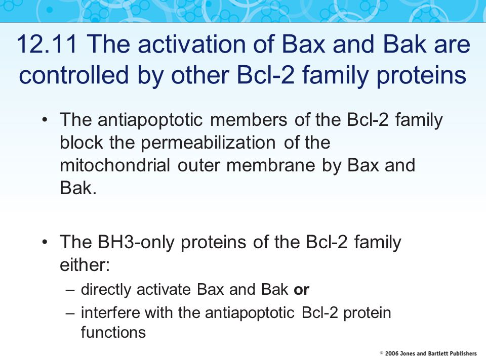 12.11 The activation of Bax and Bak are controlled by other Bcl-2 family proteins