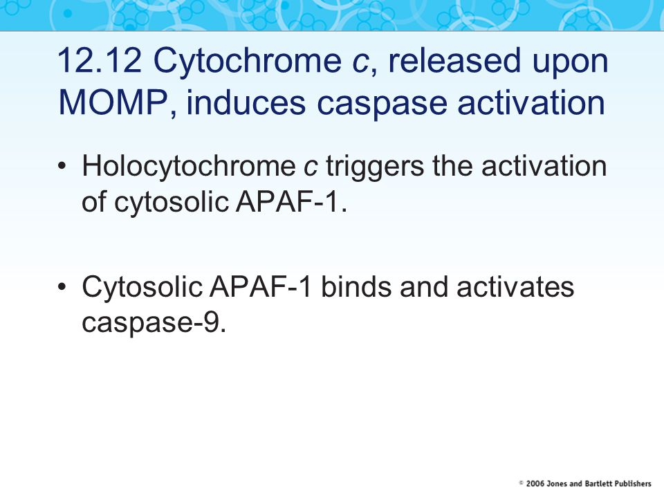 12.12 Cytochrome c, released upon MOMP, induces caspase activation
