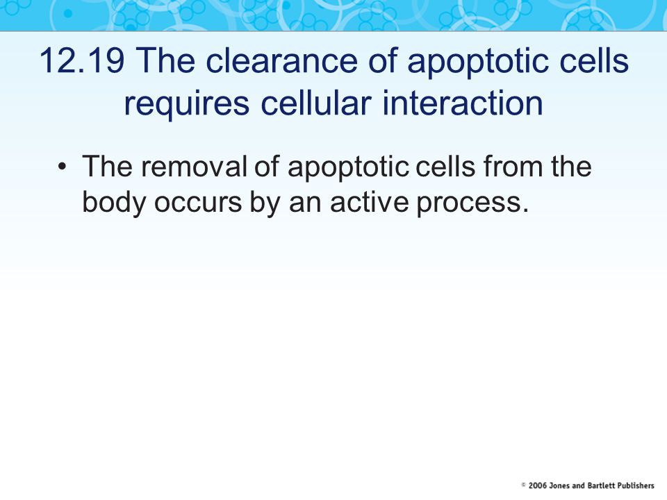 12.19 The clearance of apoptotic cells requires cellular interaction