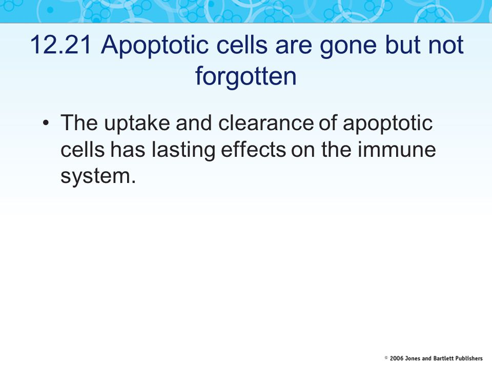 12.21 Apoptotic cells are gone but not forgotten
