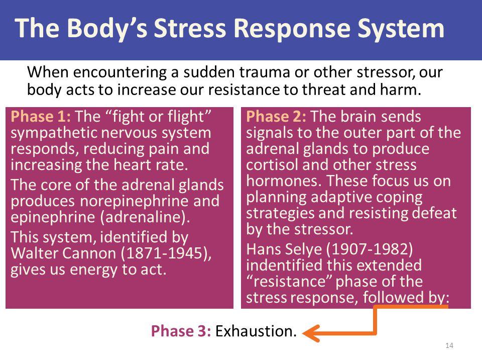 The Body's Stress Response System