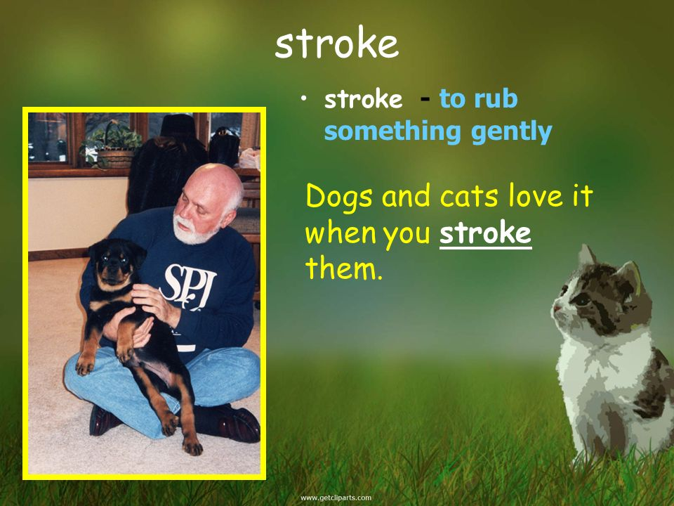 stroke Dogs and cats love it when you stroke them.