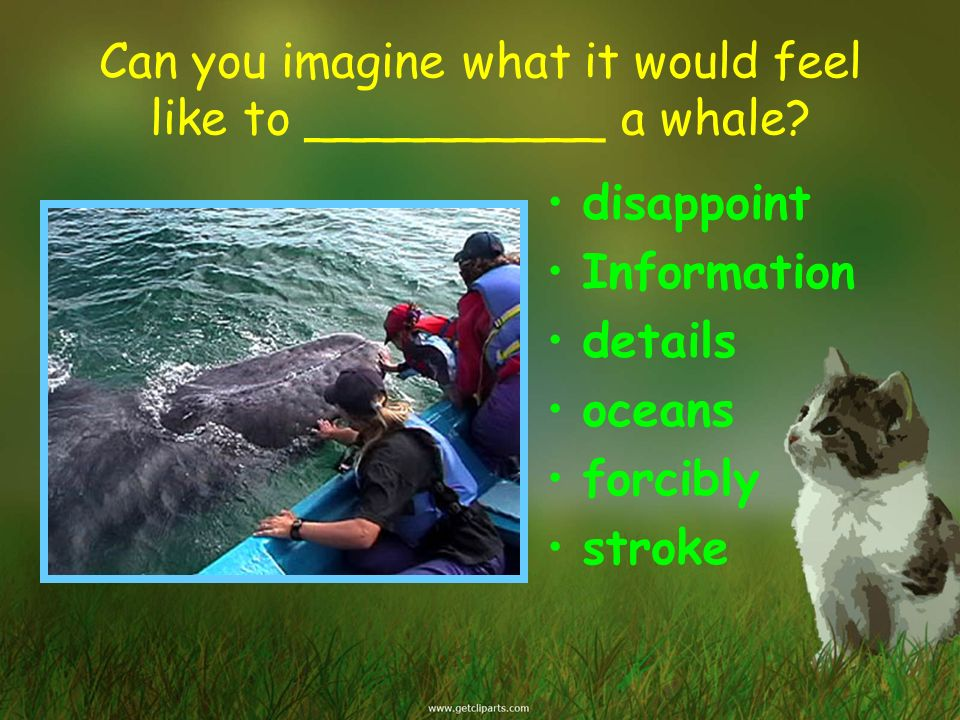 Can you imagine what it would feel like to __________ a whale