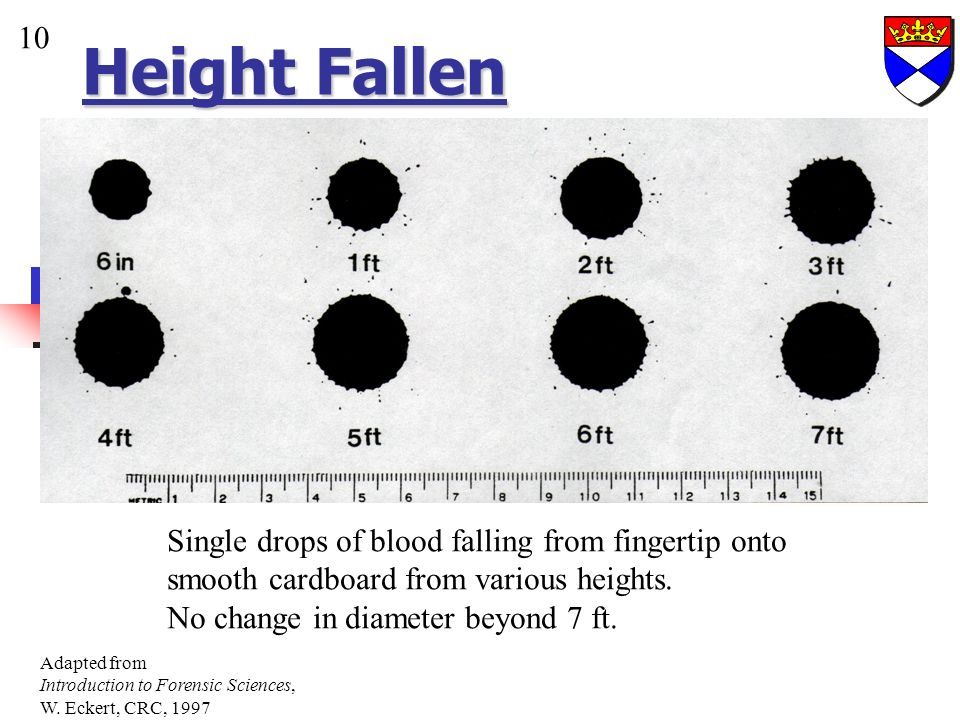 Height Fallen 10. Single drops of blood falling from fingertip onto smooth cardboard from various heights.