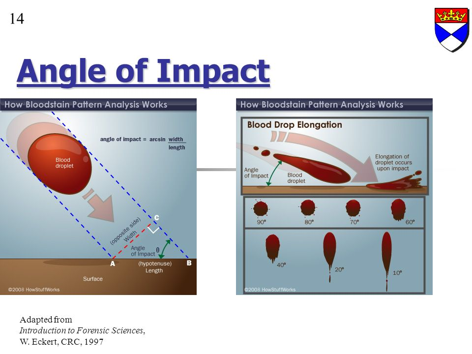 Angle of Impact 14 Adapted from Introduction to Forensic Sciences,