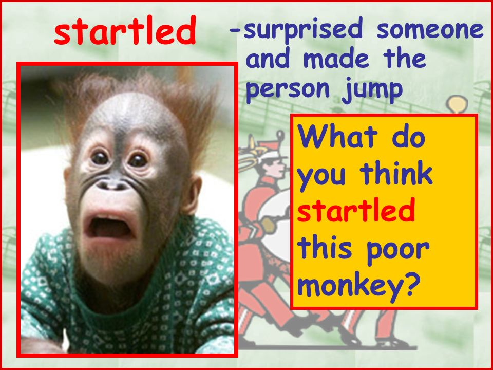 startled What do you think startled this poor monkey