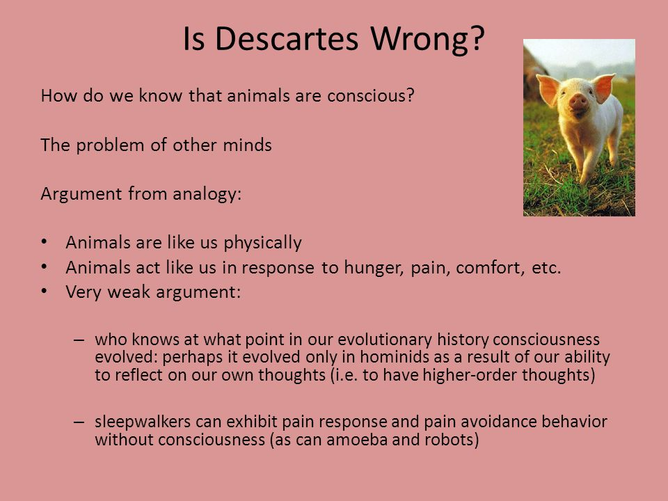 Is Descartes Wrong How do we know that animals are conscious