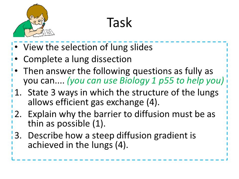Task View the selection of lung slides Complete a lung dissection