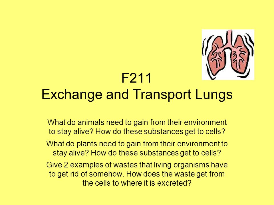 F211 Exchange and Transport Lungs